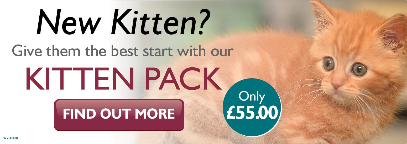 Kitten Pack covering kitten injections, flea & worm treatment, and much more for only £55 at vets in Lymm